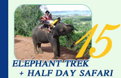 Elephant Trek and Half Day Safari