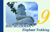Big Buddha and Elephant Trekking