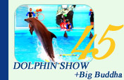 Dolphin Show and Big Buddha