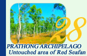 Prathong Archipelago and Untouched area of Red Seafan